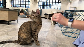 High Five Training at CatCafe Lounge