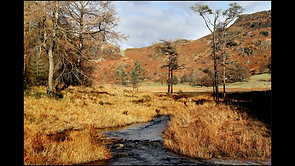 Autumn in Lakes District by Donald Parsons