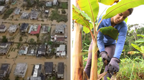 Small Farmers Are Rebuilding a Self-Sufficient Puerto Rico After Hurricane Maria
