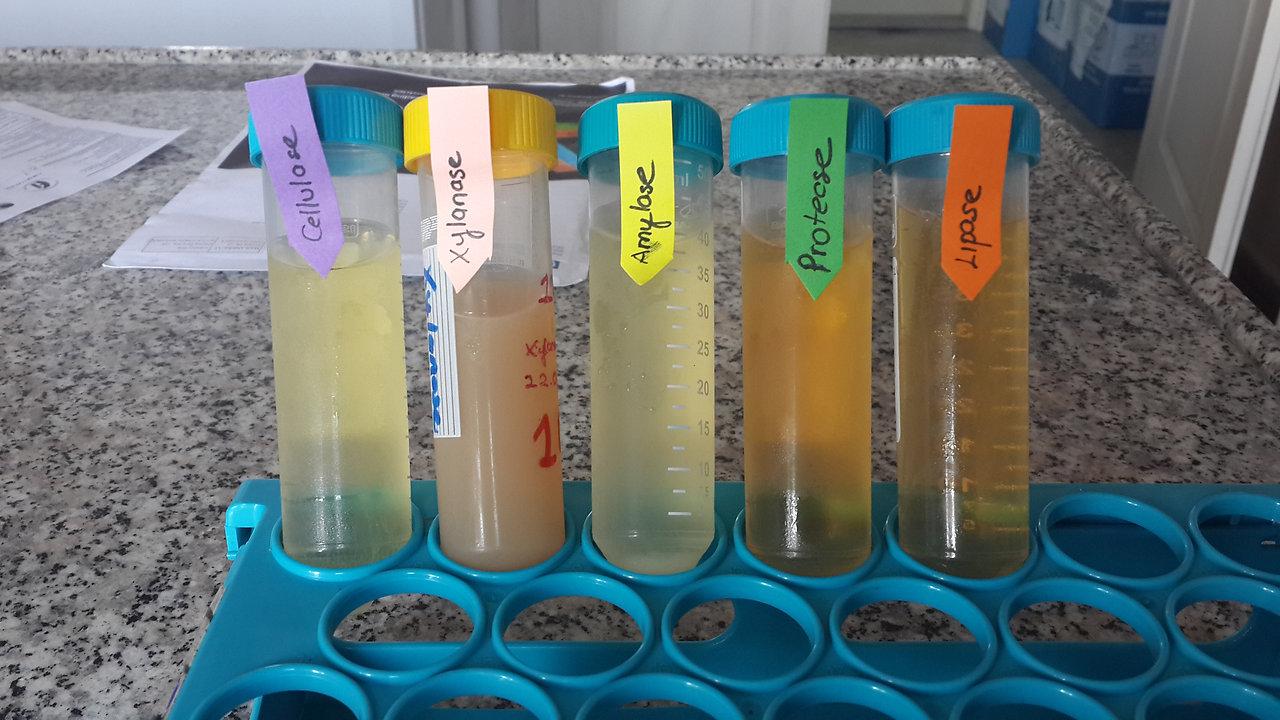 BIOTICO-Enzymes