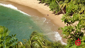 THIS IS HOME (CHARLOTTEVILLE)