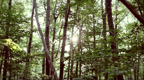 Merrell Origins: Bare Pond