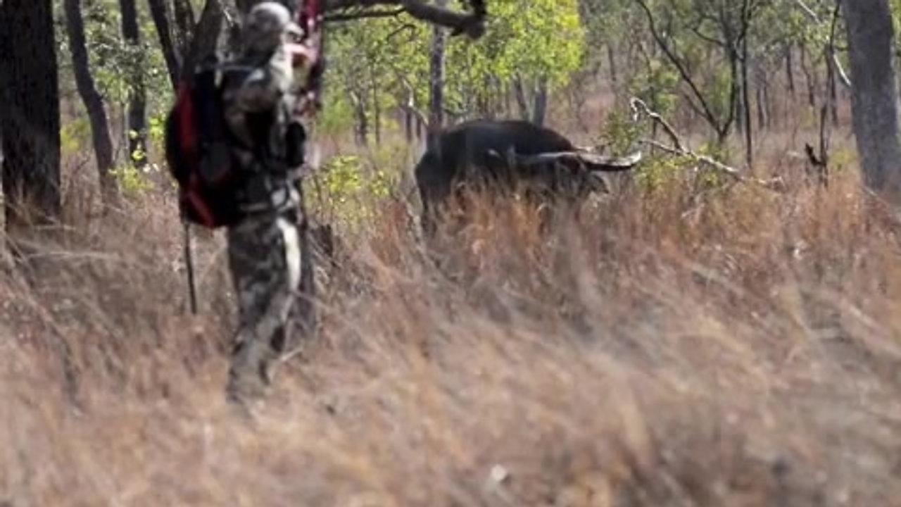 Buffalo Bow Hunt