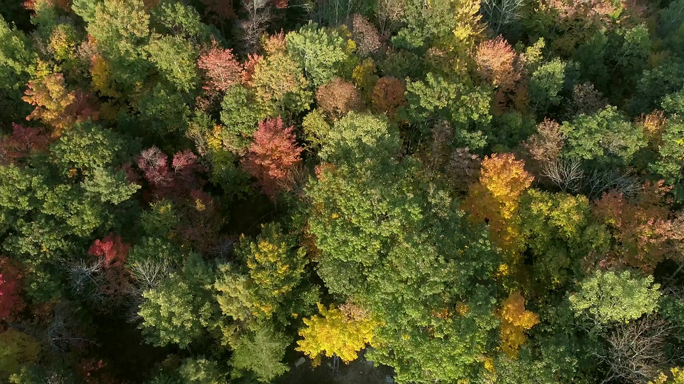 Aerial Samples
