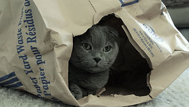 Double Trouble Cat Tunnel