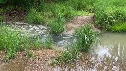 Sanders Creek