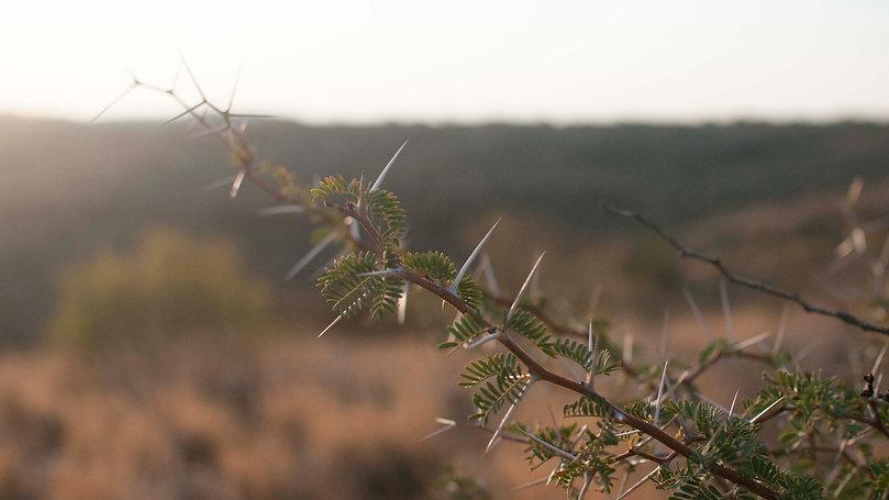 DE-BUSHING NAMIBIA