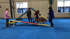 Beginner Agility, Starting out on the Teeter
