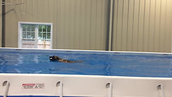 """Dock Diving """"Finn"""" the monster jumper"""