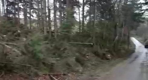 Wald3-24.1.2018