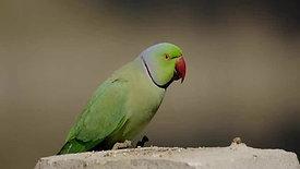 Birds Of Sirpur