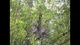 Udaan: The breeding behaviour of the Indian Grey Hornbill – An Inside View