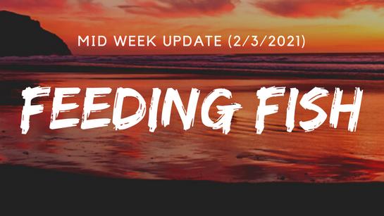 Mid Week Update (2/3/2021)