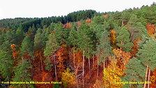 Forêt Domaniale de RIS