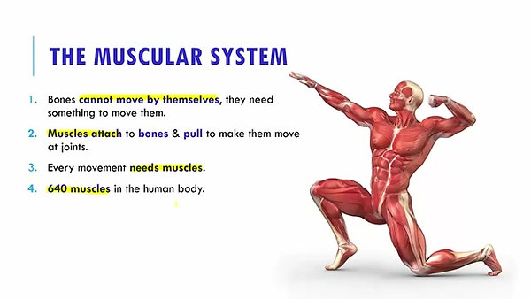 Bones and Muscles - Part 2, 5th Standard, Science