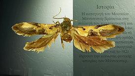 Manchester Moth