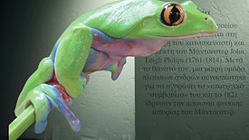 The Yellow-eyed Leaf Frog