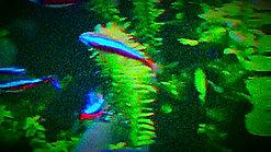 金魚あそび