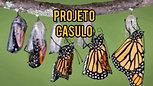 Projeto Casulo