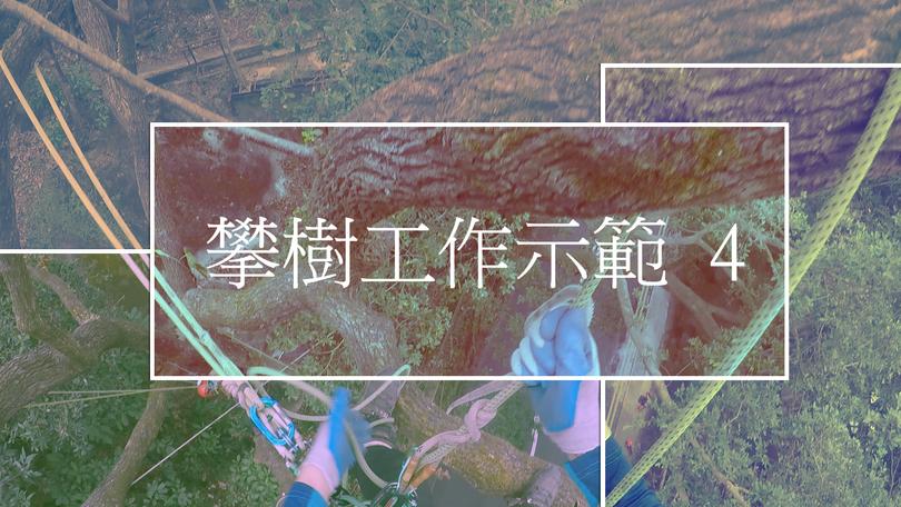 攀樹工作示範 4