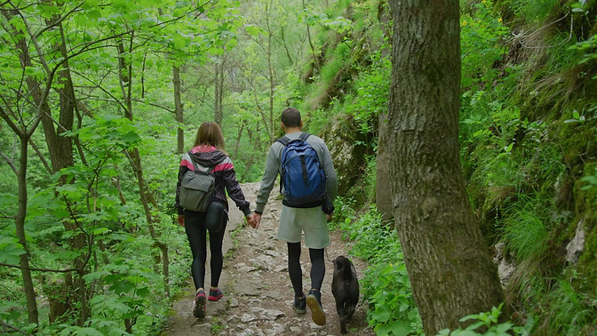 Loyal Leash- train your dog the easy way