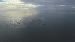 BRIER ISLAND WHALE WATCHING