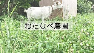 紹介動画 ロングバージョン(08:45)