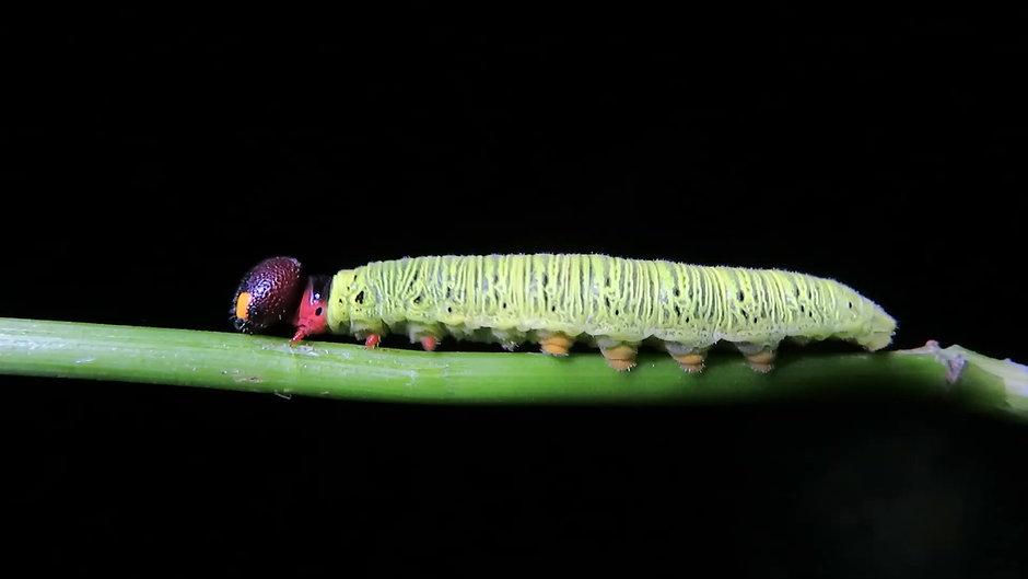 Entomology Class Trailer