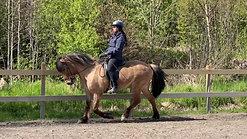 Visitering ny häst