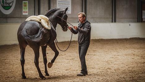 Paardendag editie 2017