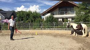Training im Roundpen