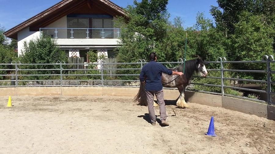 Pferdegestütztes Coaching und Persönlichkeitstraining