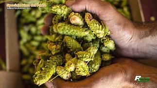 Birrando, speciale Birra del Parco