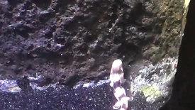 Baby Epaulette Sharks