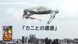 『カニとの遭遇』Switch-WEB限定CM 第2弾