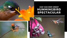 Wonderful World of Hummingbirds
