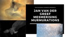 Jan Murmerations