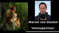 Marsel van Oosten - 'Introspection'