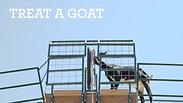 Cheyenne Mountain Zoo - Goat