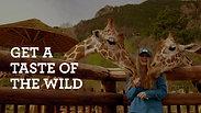 Cheyenne Mountain Zoo - Giraffes