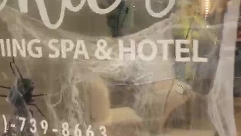 JACKIE'S GROOMING SPA & HOTEL