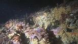Cap Marlet - Plongée de nuit 01/06/2019