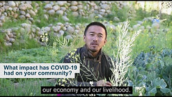 Indigenous Peoples respond to COVID-19