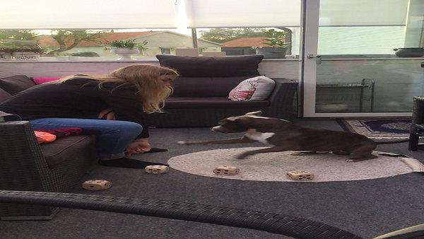 Ralf trickträning med dottern