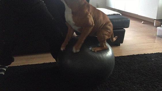 Göran balansboll