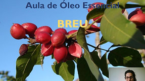 Aula óleo essencial de Breu