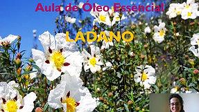 Aula óleo essencial de Ládano