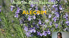 Aula óleo essencial de Alecrim