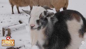 Adorable Animals at Foreverland Farm Animal Sanctuary
