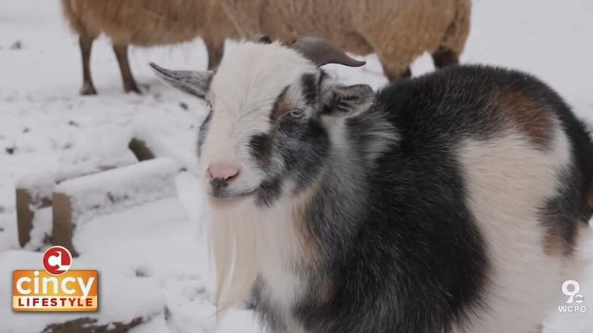Adorable Animals at Foreverland Farm Animal Sanctuary